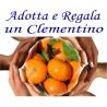 ADOTTA e REGALA Kg.5 di CLEMENTINE di Corigliano-Rossano